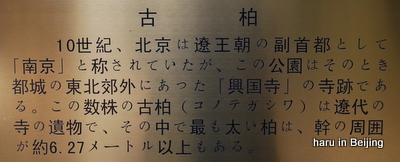DSC_0320-2.JPG